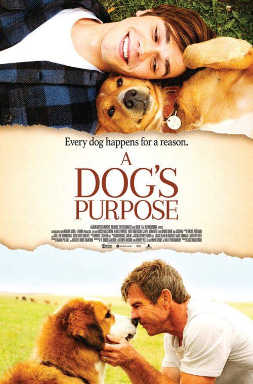 A Dog S Purpose Imdb Rating